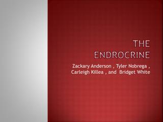 THE ENDROCRINE
