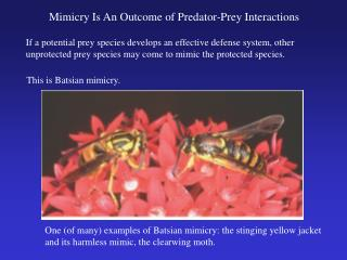 Mimicry Is An Outcome of Predator-Prey Interactions