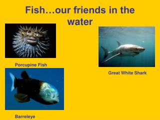 Fish…our friends in the water