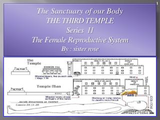 The Sanctuary of our Body THE THIRD TEMPLE Series  11    The Female Reproductive System