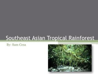 Southeast Asian Tropical Rainforest
