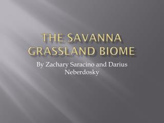 The Savanna grassland biome