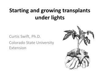 Starting Vegetables Under Lights - a PowerPoint presentation