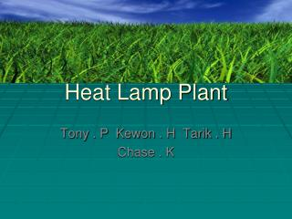 Heat Lamp Plant