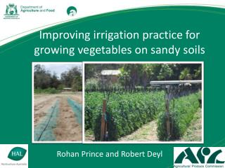 Improving irrigation practice for growing vegetables on sandy soils