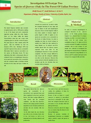 Investigation Of Ecotype Two  Species of  Quercus  (Oak) In The Forest Of  Guilan  Province