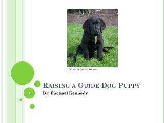 Raising a Guide Dog Puppy