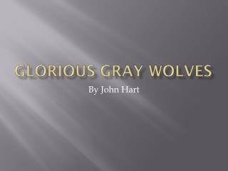 Glorious Gray Wolves