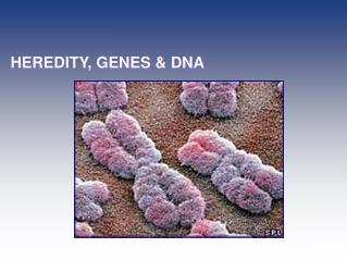 HEREDITY, GENES & DNA