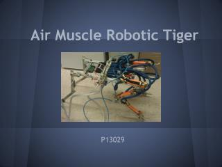 Air Muscle Robotic Tiger