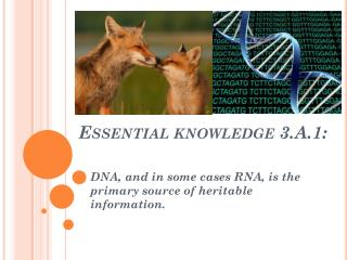 Essential knowledge 3.A.1: