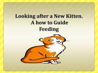 Looking after a New Kitten.  A how to Guide Feeding