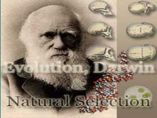 Darwin, Evolution, and Natural Selection