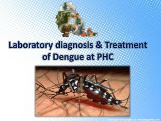 Laboratory diagnosis & Treatment of Dengue at PHC