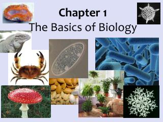 Chapter 1 The Basics of Biology