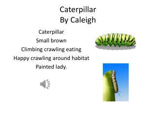 Caterpillar By Caleigh