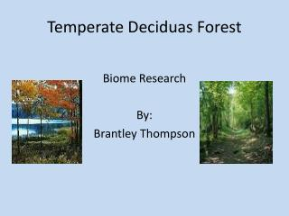 Temperate  Deciduas Forest