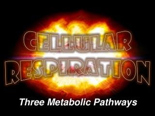 Three Metabolic Pathways