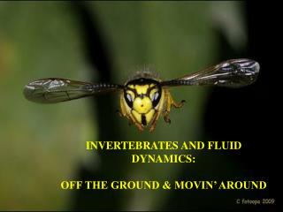 INVERTEBRATES AND FLUID  DYNAMICS : OFF THE GROUND & MOVIN' AROUND