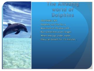 The Amazing world of Dolphins