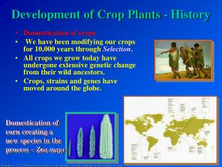Development of Crop Plants - History