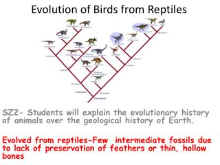 Evolution of Birds from Reptiles