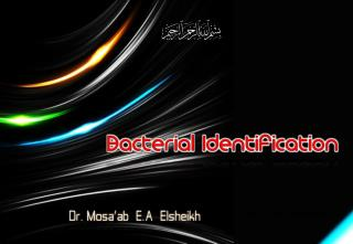 Bacteriological laboratory Diagnosis