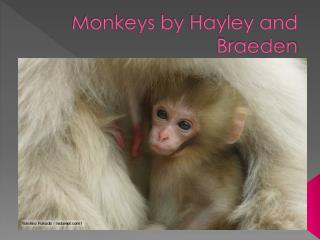 Monkeys by Hayley and Braeden