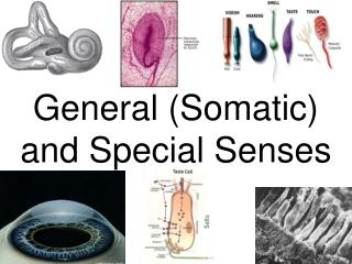 General (Somatic) and Special Senses