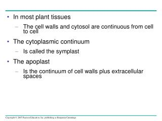 In most plant tissues The cell walls and cytosol are continuous from cell to cell