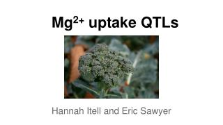 Mg 2+  uptake QTLs