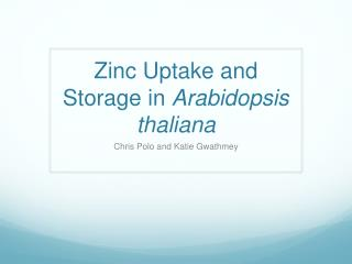 Zinc Uptake and Storage in  Arabidopsis thaliana