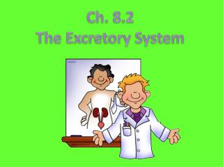 Ch. 8.2 The Excretory Syste m