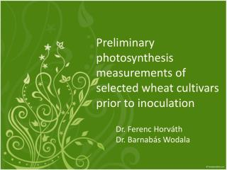 Preliminary  photosynthesis measurements of selected wheat cultivars prior to  inoculation