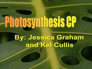 Photosynthesis CP