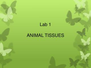 Lab  1 ANIMAL TISSUES