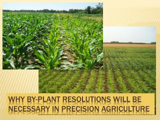 Why by-plant resolutions will be necessary in precision agriculture