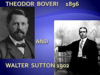 Theodor  boveri	1896 			and walter  sutton 1902