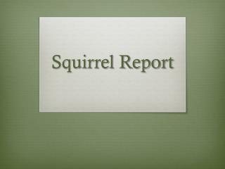 Squirrel Report