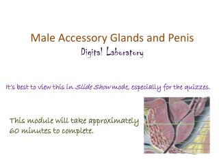 Male Accessory Glands and Penis Digital Laboratory