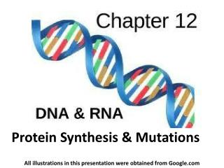 Protein Synthesis & Mutations