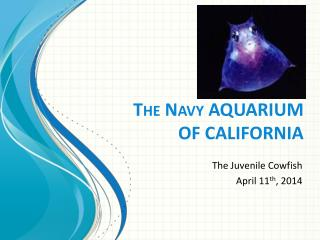 The Navy AQUARIUM  OF CALIFORNIA