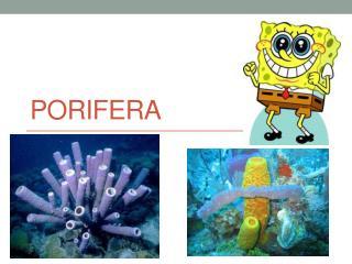 Porifera