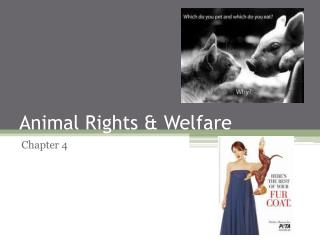 Animal Rights & Welfare