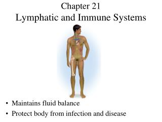 Chapter 21 Lymphatic and Immune Systems