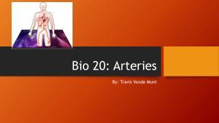 Bio 20: Arteries