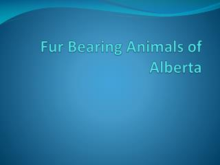 Fur Bearing Animals of  Alberta