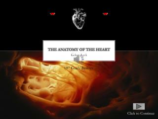The anatomy of the heart
