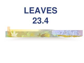 LEAVES 23.4