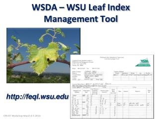 WSDA – WSU Leaf  Index Management Tool